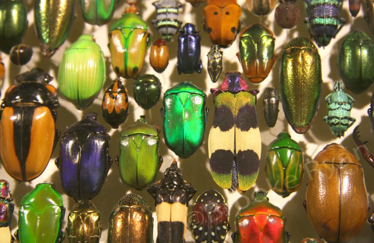 Insects are Colorful and Fun!