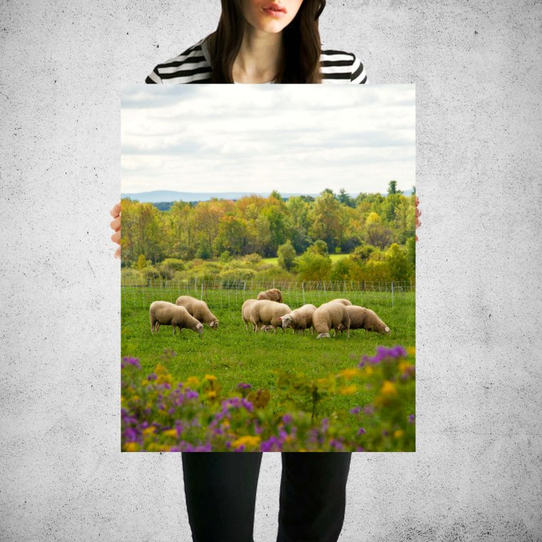 sheep20150717_mockupology_girlholdingposter_8_10 copy copy